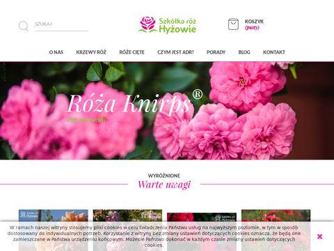 Hyzowie.com sadzonki ze szkółki róż